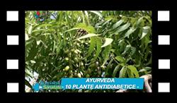 10-plante-antidiabetice